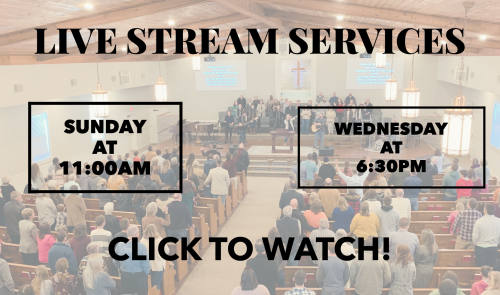 Live Stream Services